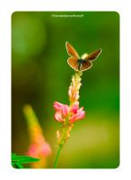 butterfly life  2 by Numicor