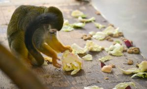 Squirrel Monkey by EHilsdonPhotography