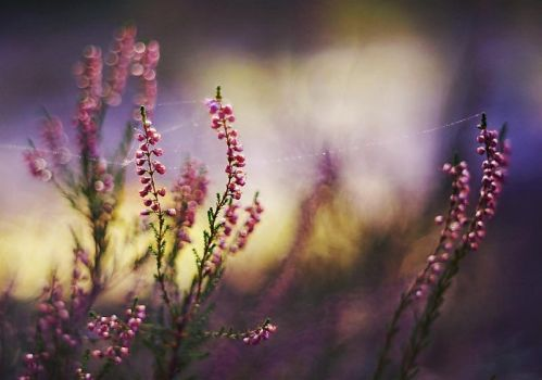 Forest Heather by Justine1985