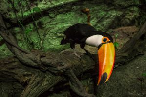 The Toco Toucan Of Gothenborg by SL-PhotographySWE