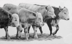 When the Cows Come Home by ACantrell
