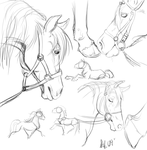 Horse sketches by nightspiritwing