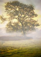 autumnal morning by theoden06