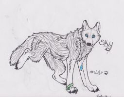 Sky, the white wolf by skywolffang
