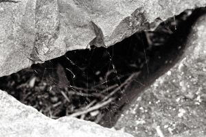 spider web two by BoothAdams