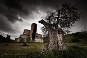 Ancient tree at Sant' Antimo by XavierJamonet