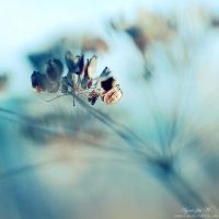 soft light. by magnesina