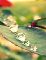 The Leaf's Tears by lunasa47