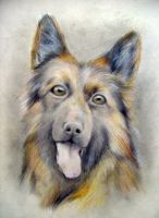old shepard dog by monster242