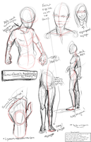 Quick Anatomy by Zelphyre