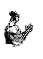 CotA Wolverine by mediocre-mind