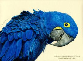 Hyacinth Macaw by AmBr0