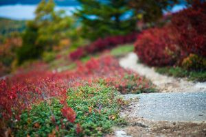 UNRESTRICTED Wonderland Path Stock 3 by little-spacey