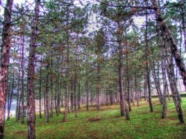 hdr forest 2 by DR13agoslav