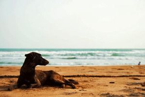 dog n beach by im-aady