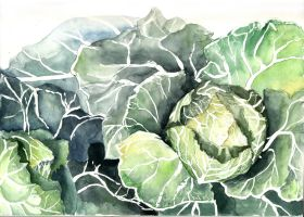 Cabbage Study V by amwah