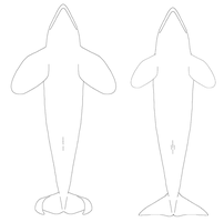 Free Male/Female Ventral Orca Linearts by AnoOrca