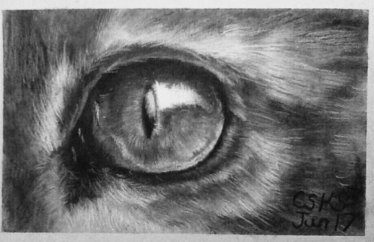 Cat Eye Study by SiriuslyArt