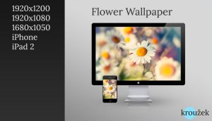 Flower Wallpaper by WhiteAmerica