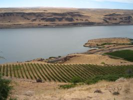 Columbia River Gorge 11 by rifka1