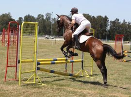 STOCK Showjumping 434 by aussiegal7