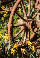 Bloomin' wagon wheel by kayaksailor