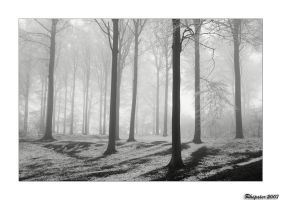 mist and snow in the woods by rhipster