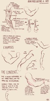 Arm Muscles 101 by Deimos-Remus