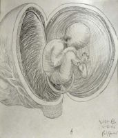 Womb - Da Vinci by PabloQ