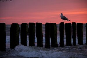 Seagull by Piasecka