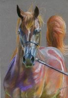 Colorful arabian in pastels by Hei-La