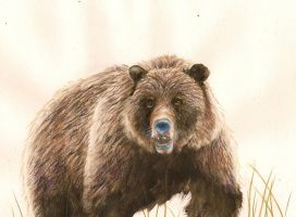 Grizzly for GoheX by GoldenGirls