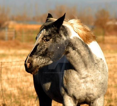 Horse with Pepper Face Horses by houstonryan
