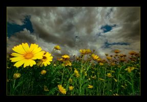 On the sunny side of life by gilad