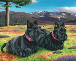 Highland Scotties by NewAgeTraveller
