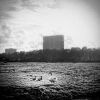 Lomo Ducks by sneakazz