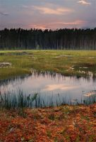 The Bog by DeingeL