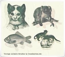 Vintage Animals High Res PS Brushes by iCatchUrDream