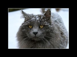 Snow Covered Kitty by Dreimond