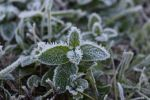 Morning frost. by Presona-photo