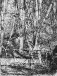 tree drawing, Collapse to Nature by nimra