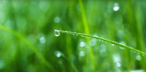 Dew drop by detnarg