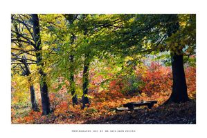 Autumn in To'kaj - I by DimensionSeven