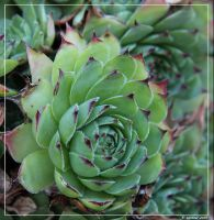 Pointy Green by winther