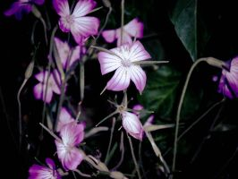 Flowers_4 by JEricaM