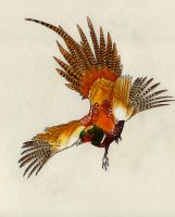 Flight of the Pheasant by Eurwentala