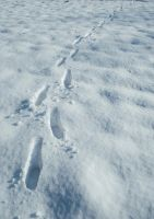 Snowscape Stock 2 by Sed-rah-Stock