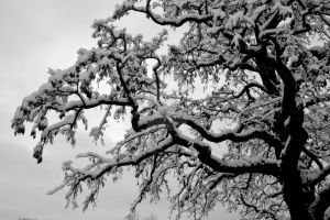 Clasped Under The Snow by PINK-ROSE14