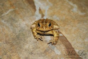 Toad by MiaLeePhotography