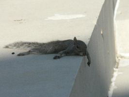 Chilling Squirrel by CannelleAddict